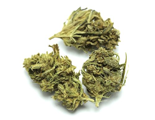 têtes de CBD, fleurs de cannabis légal, cogollo de canamo industrial