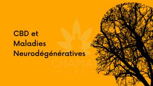 CBD et Maladies Neurodégénératives
