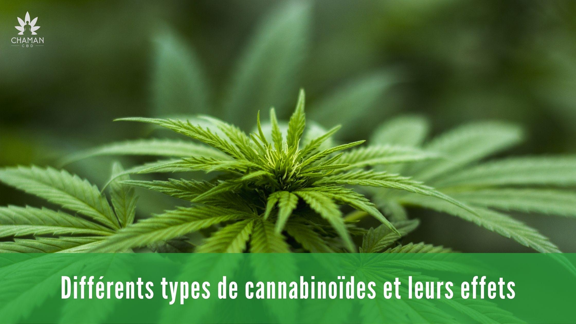 Differents types de cannabinoides et leurs effets